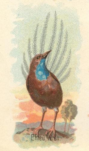 Emeu-Wren