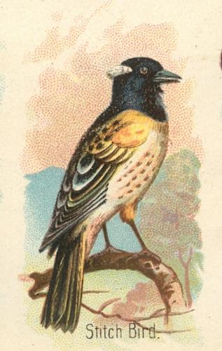 Stitch-Bird