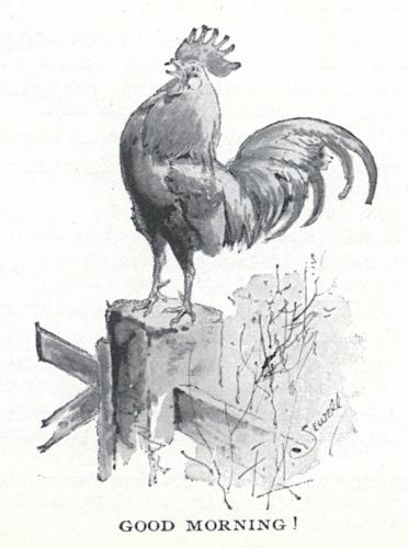Cock Crow