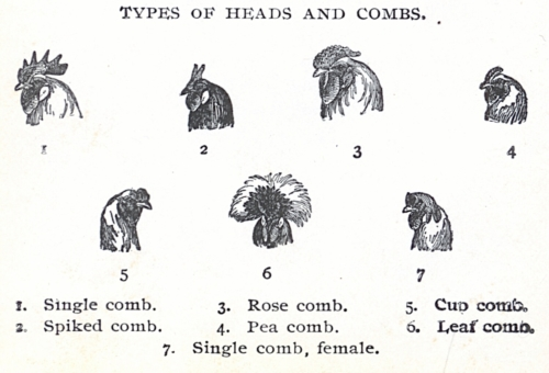 Types of Heads and Combs