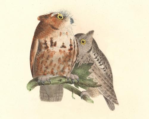 Birds of New York - J. W. Hill, James De Kay