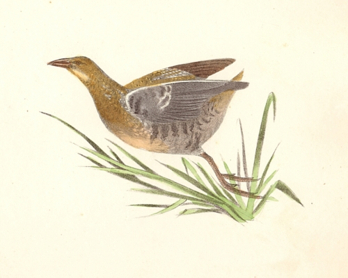 The Sora Rail