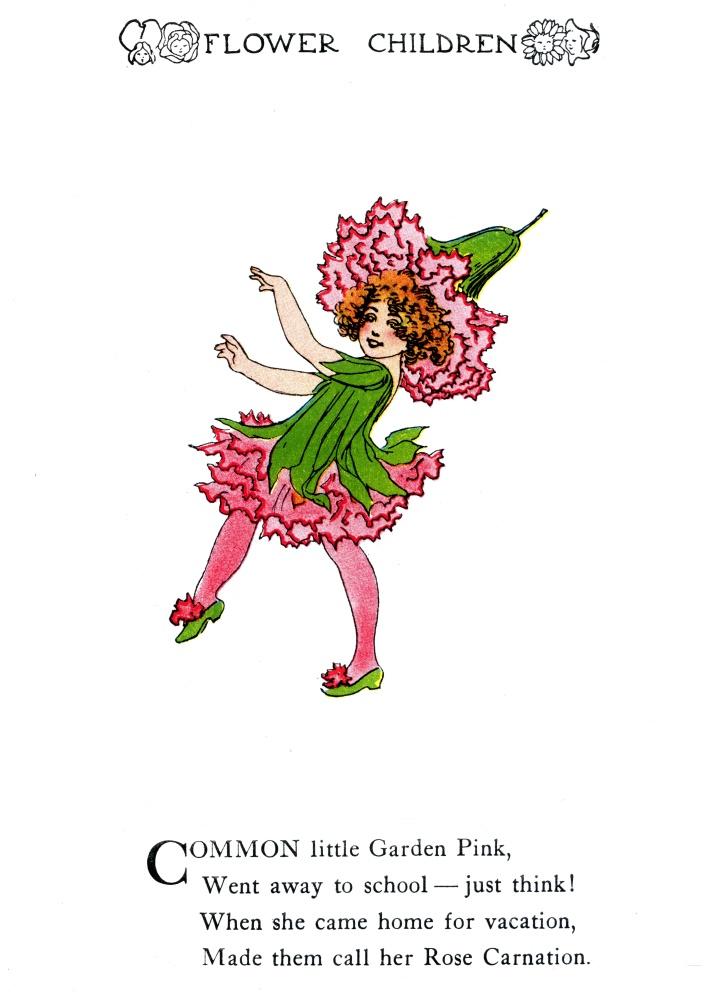 Garden Pink - Rose Carnation