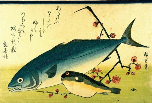 Inada, Fugu