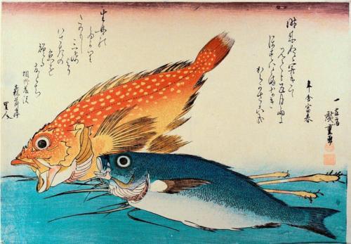 Kasogo, Himedai - Snapper