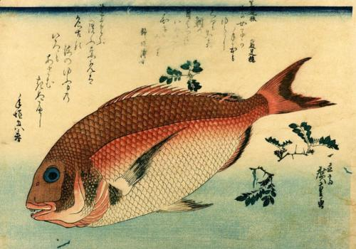 Madai or Red Tai - Red Seabream