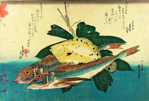 Hobo, Karei (Flounder)