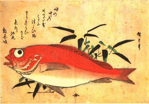 Akodai (Red Rockfish) with bamboo grass
