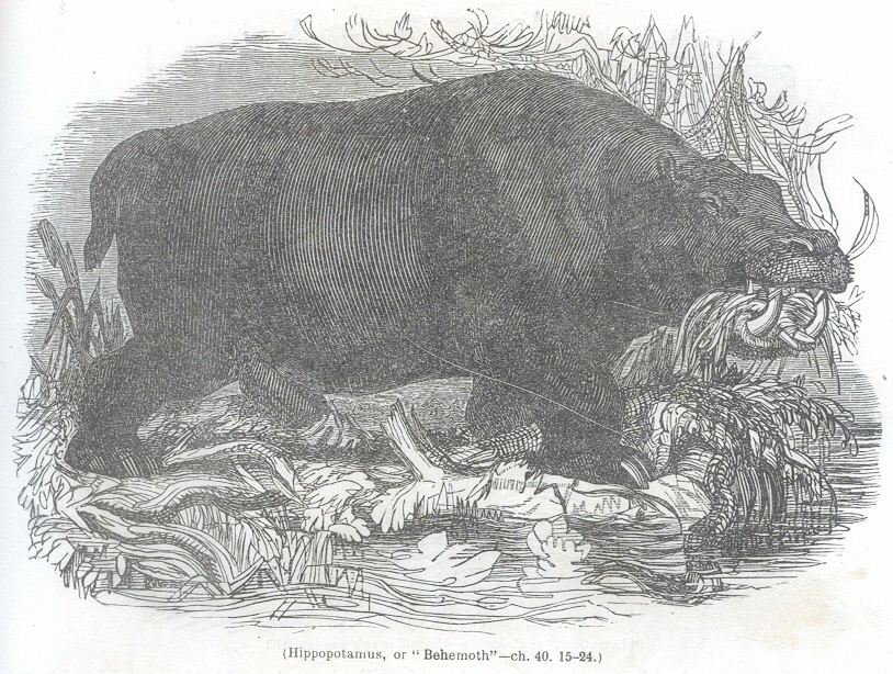 "Hippopotamus, or ""Behemoth"""