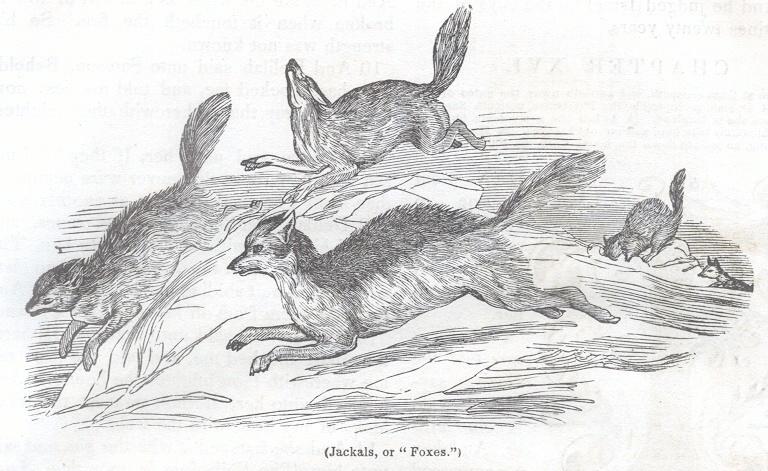 "Jackals, or ""Foxes"""