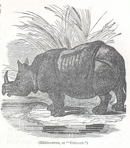 "Rhinoceros, or ""Unicorn"""