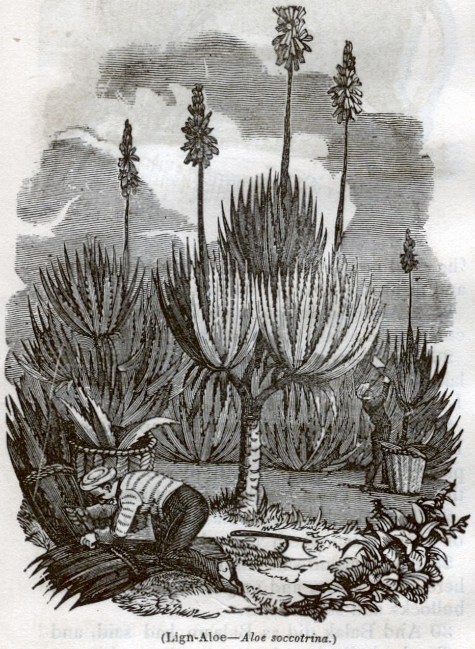 Lign-Aloe