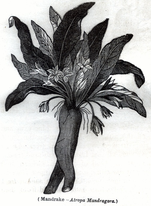 Plants - Varia Lot 7
