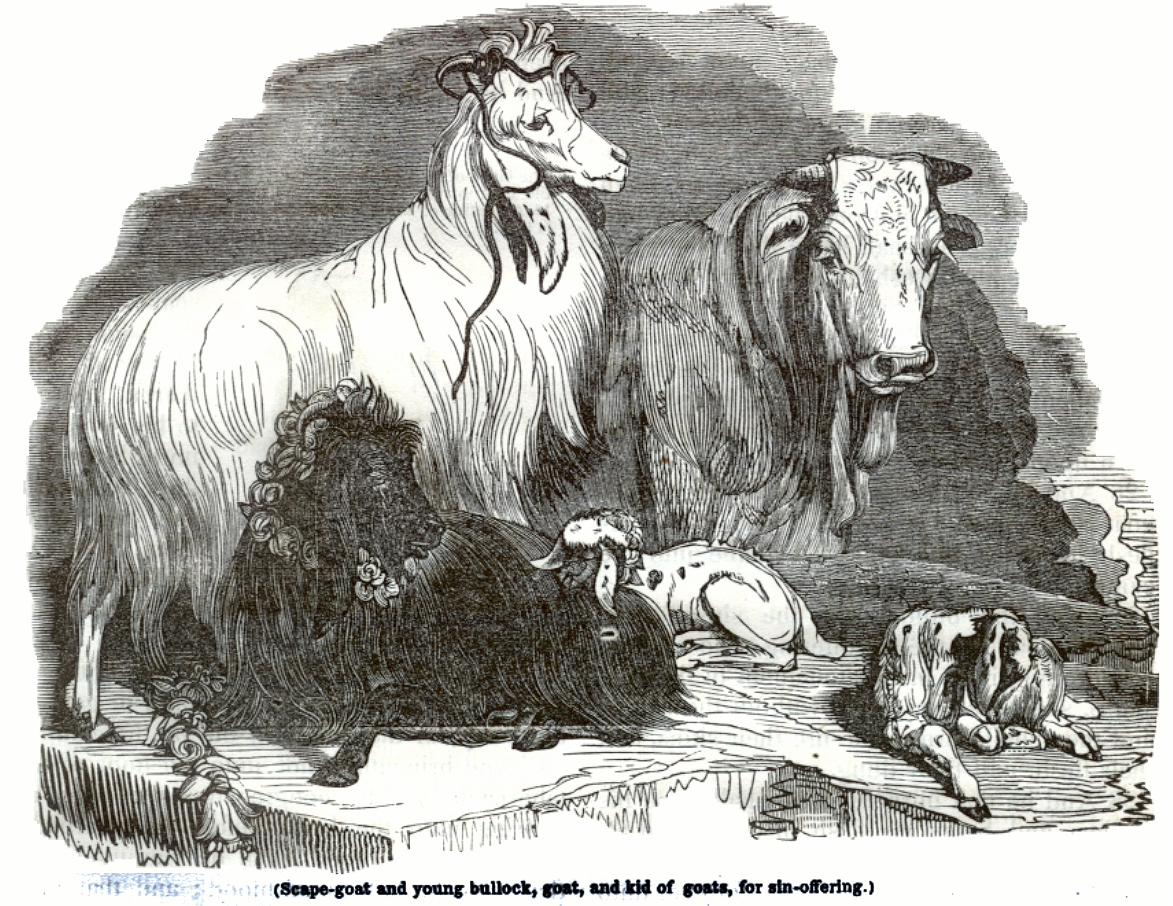 Scape goat, young bullock, goat, kid of goats, for sin offering