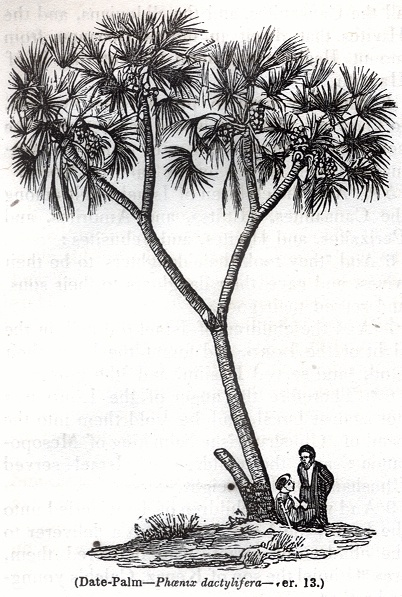 Trees - Varia Lot 7