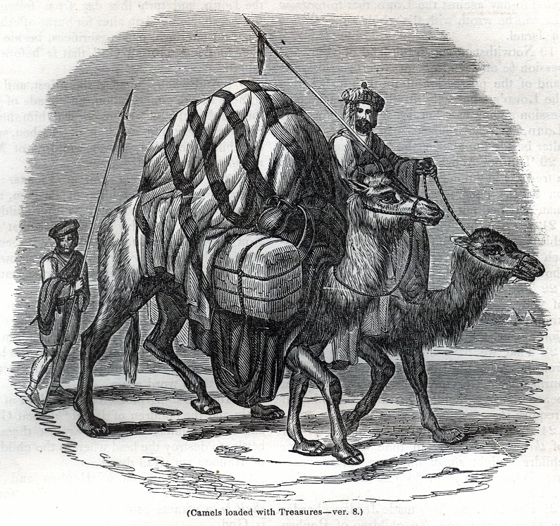 Camels loaded with Treasures