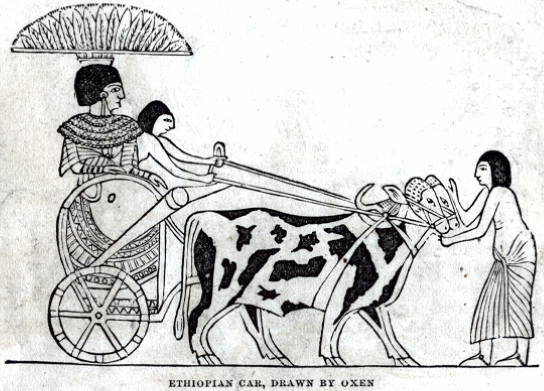 Ethiopian Car, Drawn by Oxen