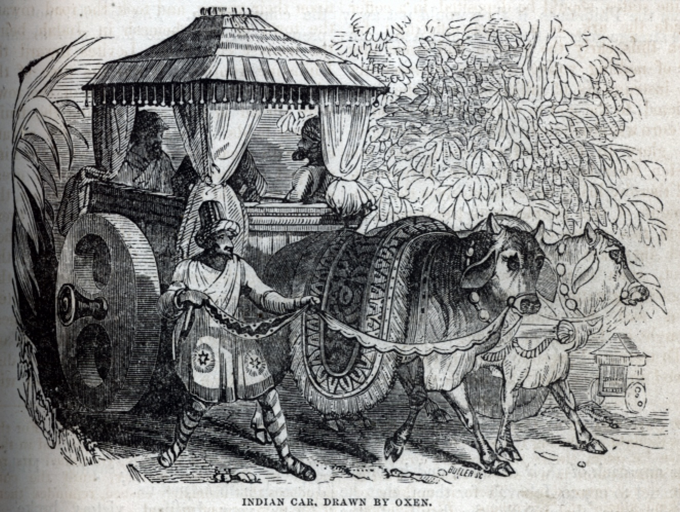Indian Car, drawn by Oxen