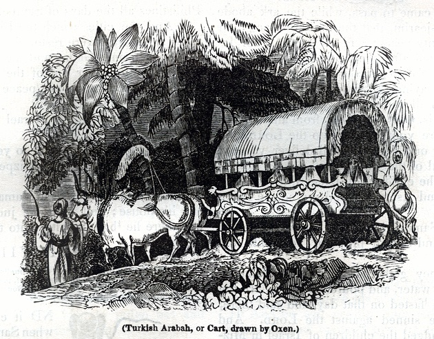 Turkish Arabah, or Cart, drawn by Oxen